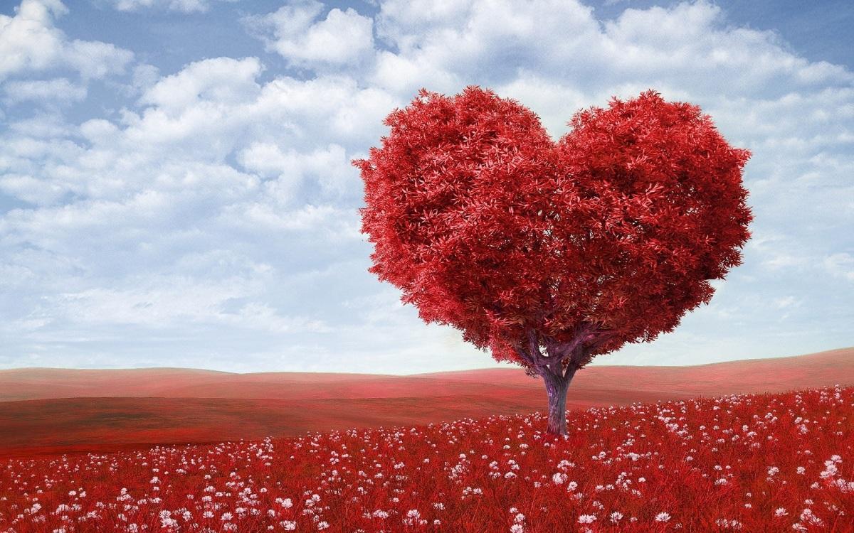 Es buen día para apreciar al amor